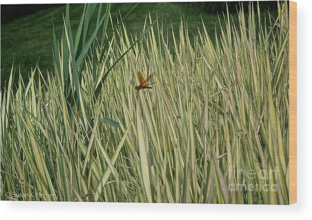 Outdoors Wood Print featuring the photograph Green And Gold by Susan Herber