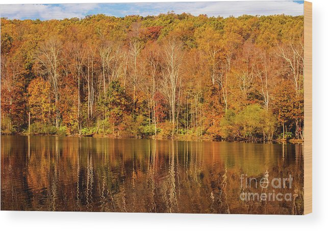 Tree Wood Print featuring the photograph A Season Of Reflection by Roy Branson