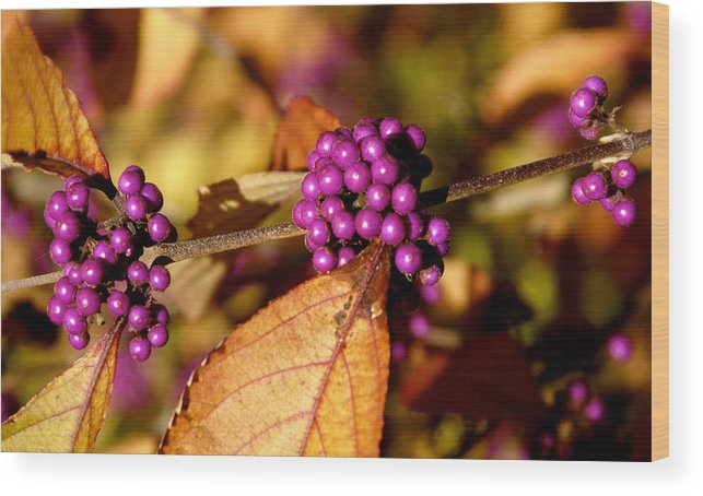 Botany Wood Print featuring the photograph Berry Bush by Sonja Anderson