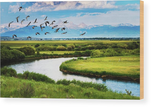 Branta Canadensis Wood Print featuring the photograph Canada Geese Entering Idaho's Teton Valley by TL Mair