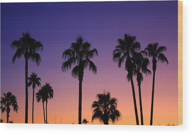 Sunsets Wood Print featuring the photograph Colorful Tropical Palm Tree Sunset by James BO Insogna