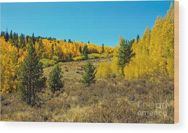 Fall Colors Wood Print featuring the photograph Glen Of Color by Greg Plamp