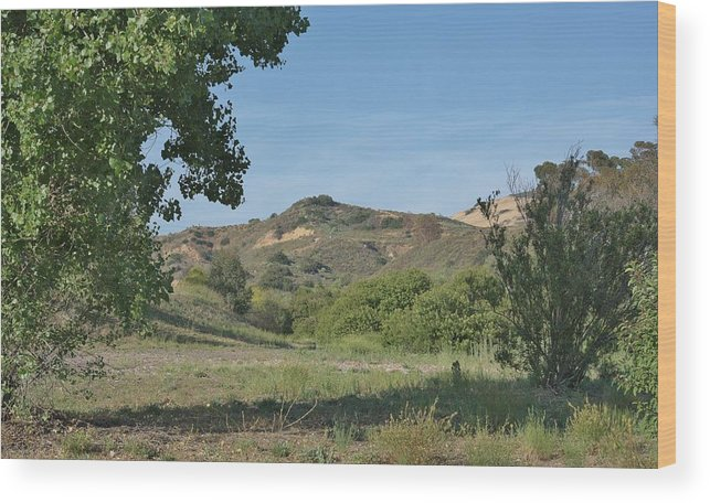 Linda Brody Wood Print featuring the photograph Hills In Peters Canyon by Linda Brody