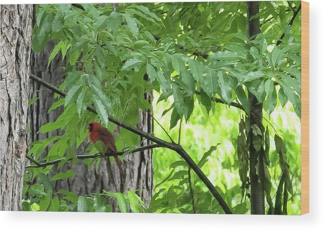 Bird Wood Print featuring the digital art The Cardinal In The Woods by Ed Stines