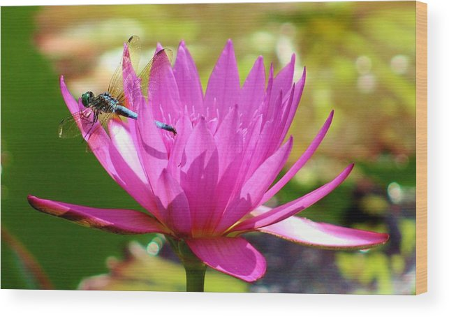 Karen Silvestri Wood Print featuring the photograph You Cant See Me by Karen Silvestri