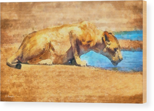 Rossidis Wood Print featuring the painting Lioness Drinking by George Rossidis
