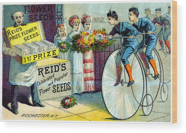 Vintage Wood Print featuring the painting 19th C. Reid's Flower Seeds by Historic Image