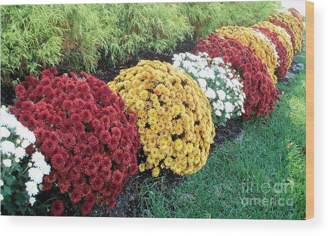 Flower Wood Print featuring the photograph Color Puffs by Tahlula Arts