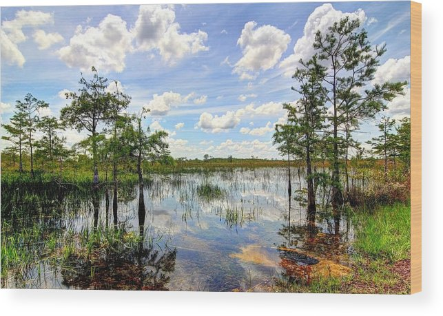Everglades Wood Print featuring the photograph Everglades Landscape 8 by Rudy Umans