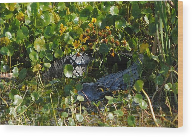 Alligator Wood Print featuring the photograph Hiding In The Marsh by Michael Terracina
