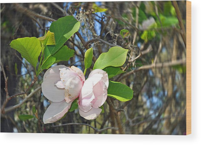 Floral Wood Print featuring the photograph Magnolia Flower by Deborah Good