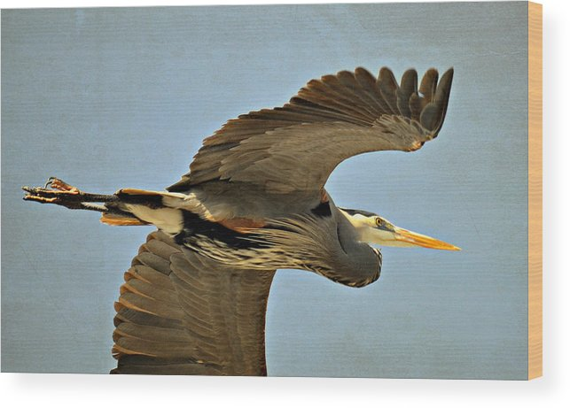 Great Blue Heron Wood Print featuring the photograph Early Departure by Fraida Gutovich