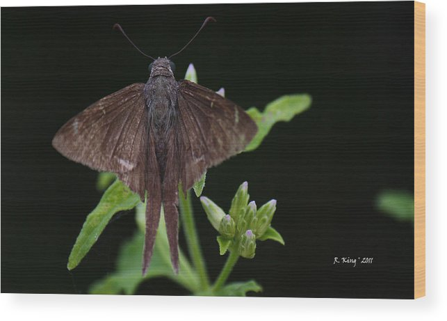 Roena King Wood Print featuring the photograph Brown Butterfly Dorantes Longtail by Roena King