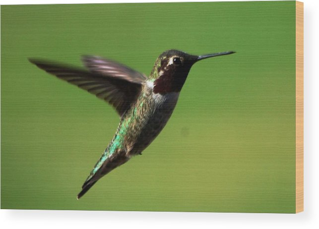 Wood Print featuring the photograph Humming On Flight by Meeli Sonn