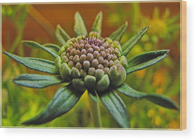 Flowers Wood Print featuring the photograph Pinchshin Bud by Debbie Portwood