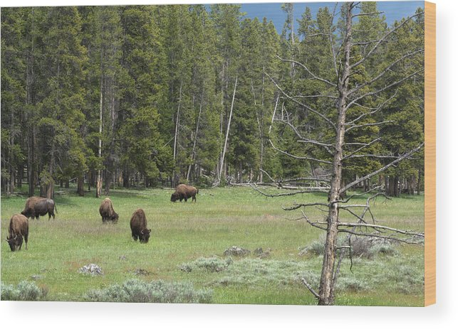 Yellowstone National Park Wood Print featuring the photograph In A Field by Linda Kerkau
