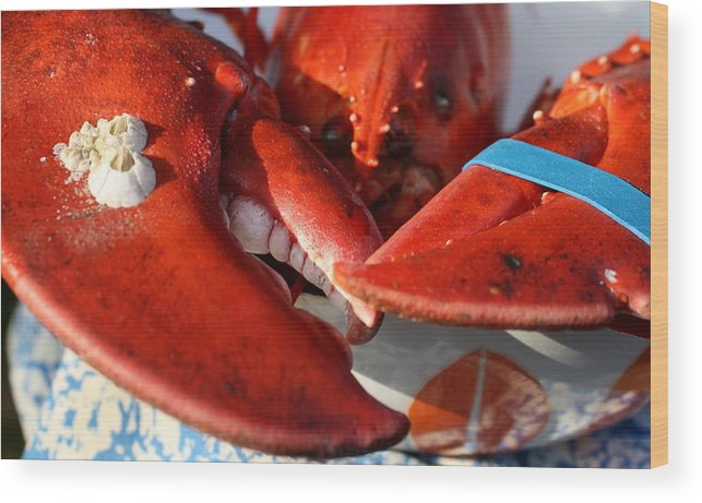 Lobster Wood Print featuring the photograph are YOU looking at ME by Annie Babineau
