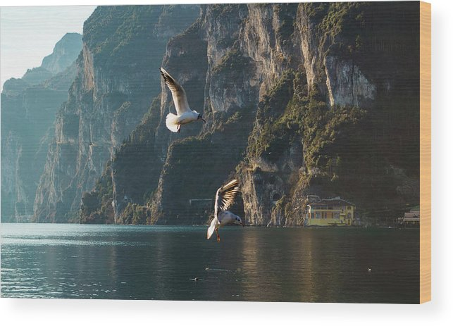 Bird Wood Print featuring the photograph Birds Fishing by Happy Home Artistry