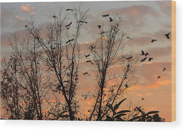 Birds Wood Print featuring the photograph Black Birds At Sundown by Caroline Urbania Naeem