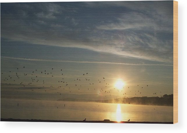 Foggy Wood Print featuring the photograph Foggy Flock Of Seagulls Sunrise 9 17 2009 034a by Chris Deletzke aka Sparkling Clean Productions