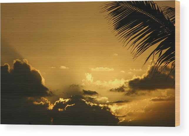 Tropical Wood Print featuring the photograph Golden Sunset by Doug Johnson