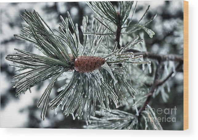 Pine Cone Wood Print featuring the photograph Icy Pine by Steve Edwards