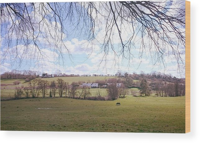 Landscape Wood Print featuring the photograph Paddy by Nicholas Rainsford