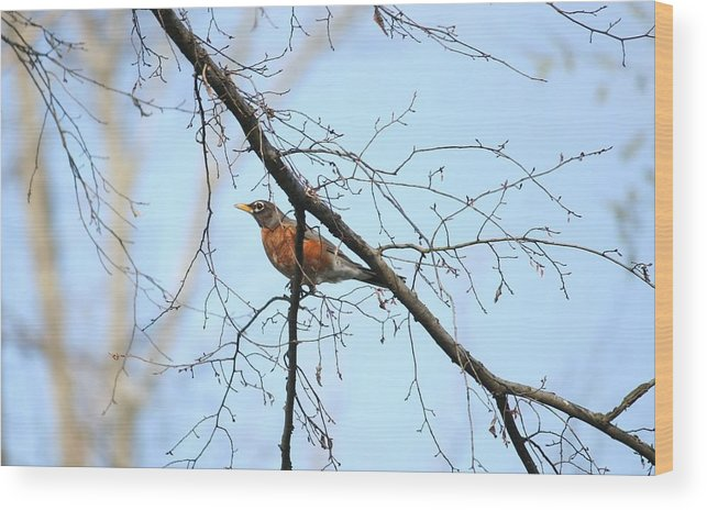 Robin Wood Print featuring the photograph Robin by Magda Levin-Gutierrez