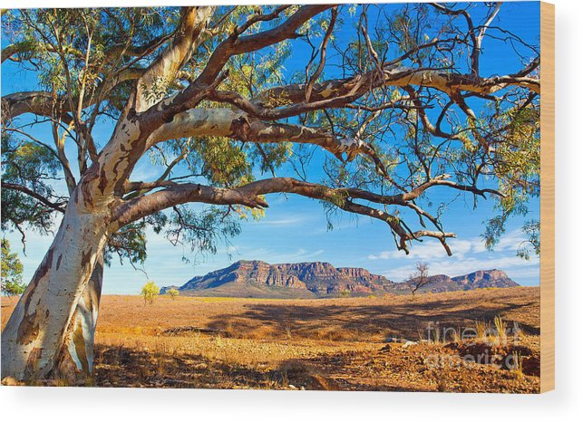 Wilpena Pound Flinders Ranges South Australia Outback Landscape Wood Print featuring the photograph Wilpena Pound by Bill Robinson