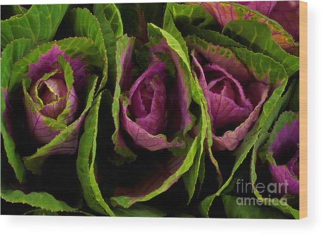 Cute Cabbage Wood Print featuring the photograph Cute Cabbage by Jolanta Meskauskiene