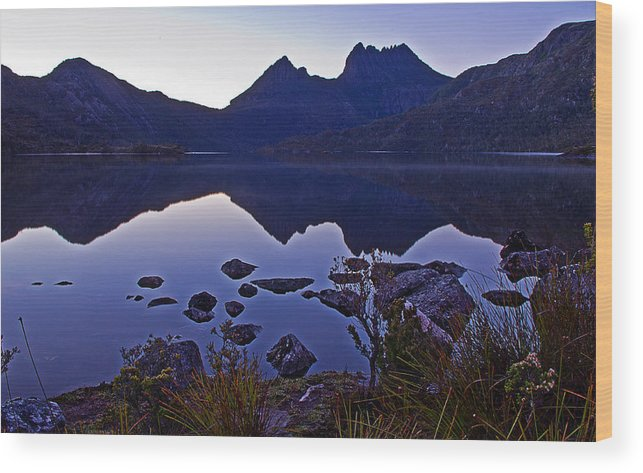 Lakes Wood Print featuring the photograph Dove At Dawn by Tony Crehan