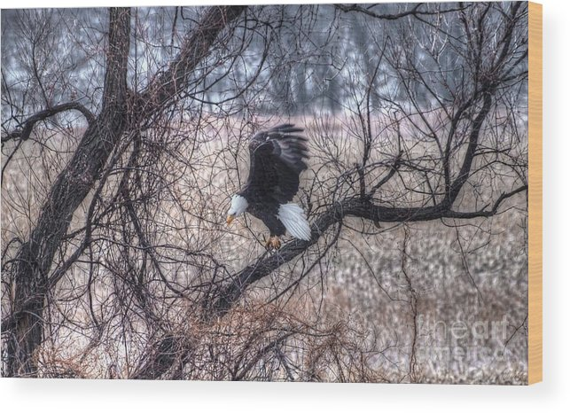 Eagle Wood Print featuring the photograph Eagle Landing by M Dale