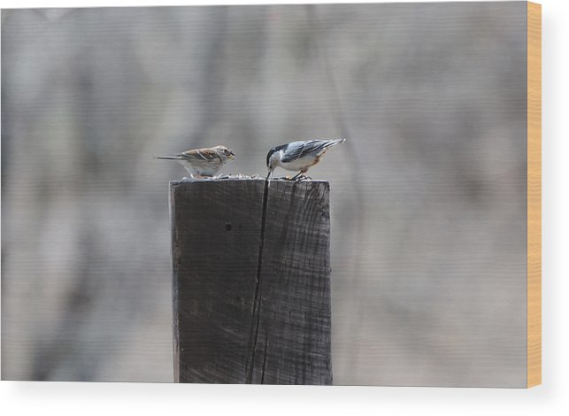 Birds Wood Print featuring the photograph Let's Eat by Scott Angus