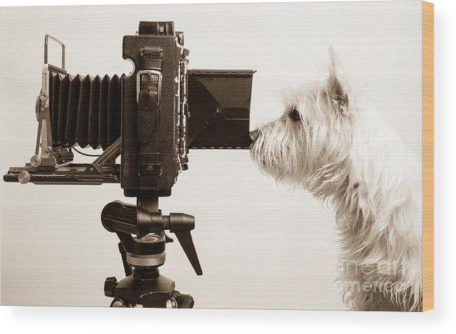 Westie Wood Print featuring the photograph Pho Dog Grapher by Edward Fielding