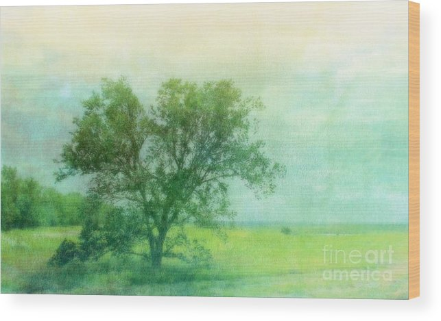 Tree Wood Print featuring the photograph Tree In The Flint Hills by Susan Turner