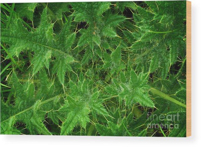 Weed Wood Print featuring the photograph Weed by Jolanta Meskauskiene