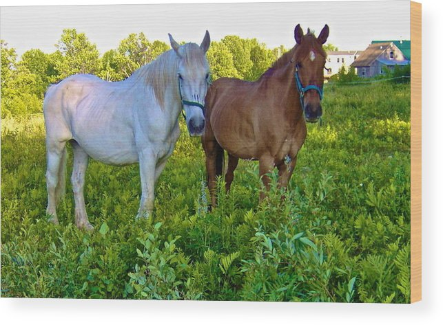 Horses Wood Print featuring the photograph Best Buds Out To Pasture by George Ramos