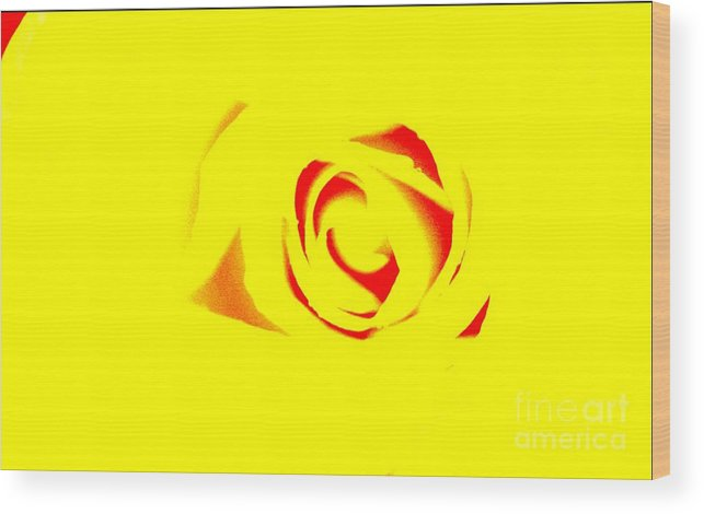 Rose Art Wood Print featuring the photograph Curves by Kim Henderson