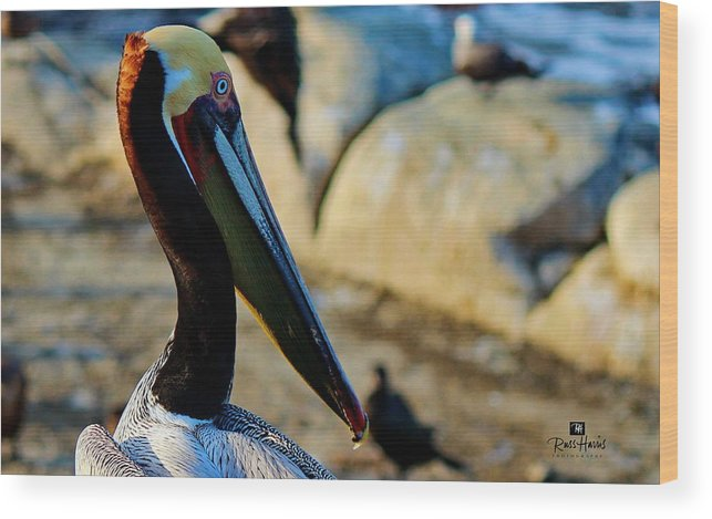 Pelican Wood Print featuring the photograph Pelican by Russ Harris