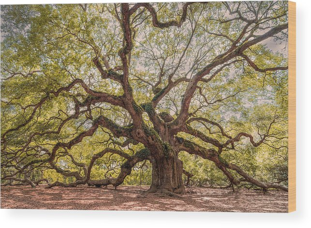 Alive Wood Print featuring the photograph Angel Limbs by Drew Castelhano