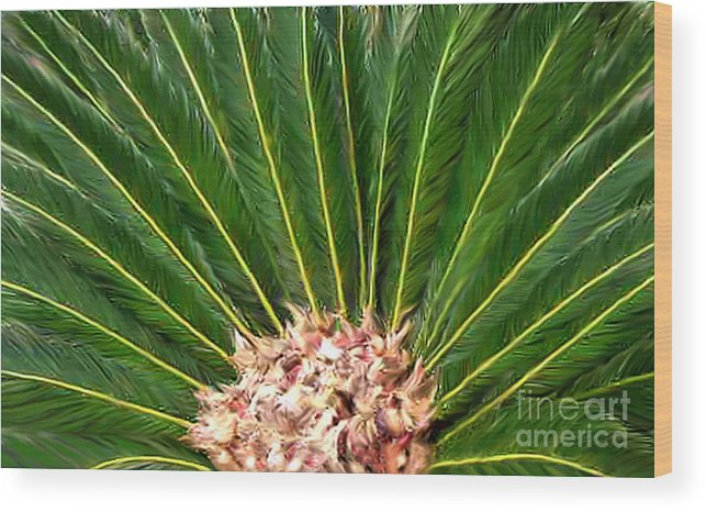 Nature Wood Print featuring the photograph Centered Palm by Lucyna A M Green