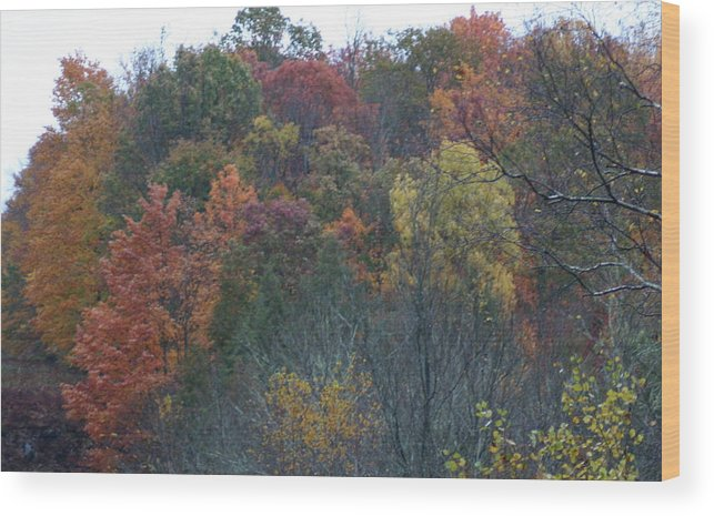Color's Of Fall Wood Print featuring the photograph Color's Of Fall by Kevin Dunham