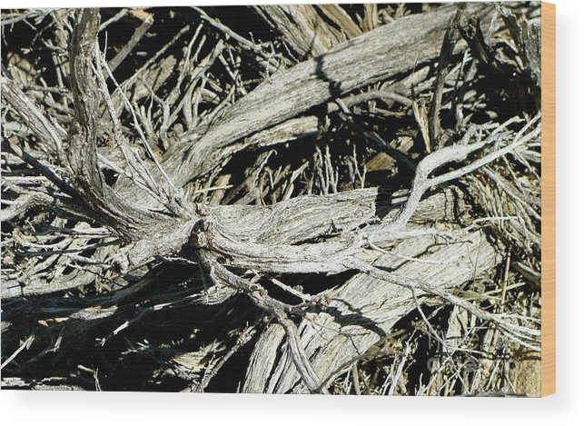 Photos Wood Print featuring the photograph Dead Joshua Wood by Bruce Peterson
