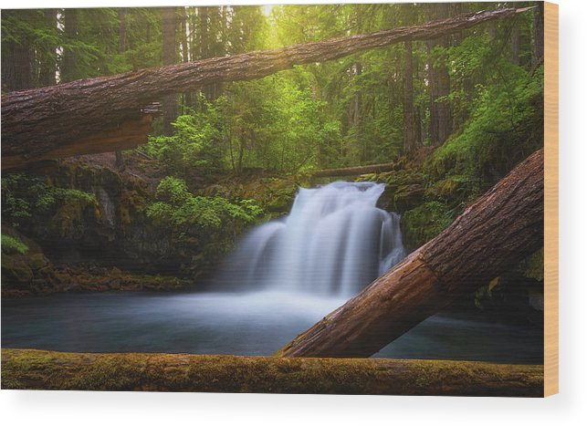 Sunlight Wood Print featuring the photograph Enchanted Forest by Darren White