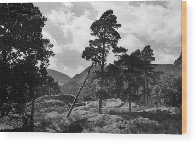 Black And White Wood Print featuring the photograph Fallen Tree by Terence Davis