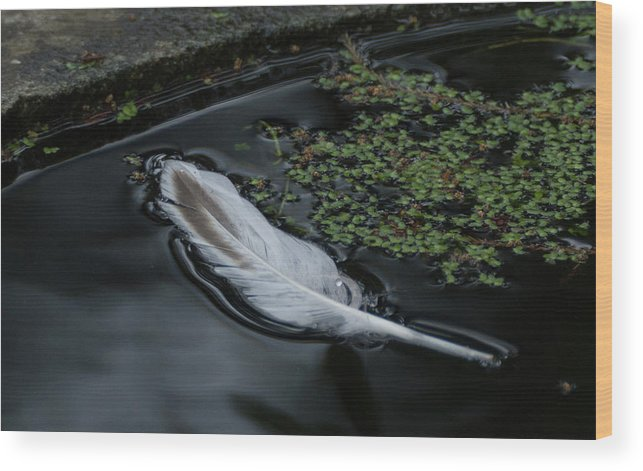 Floating Wood Print featuring the photograph Grace by Marilyn Wilson