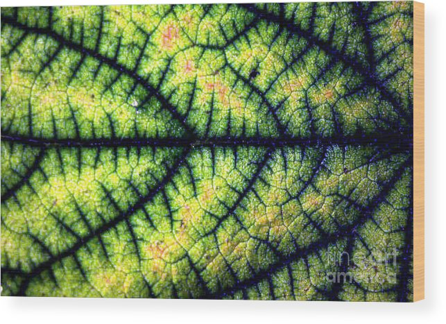 Leaf Wood Print featuring the photograph Leaf by Dragica Micki Fortuna