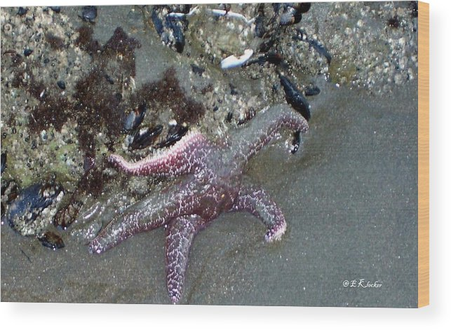 Starfish Wood Print featuring the photograph Poor Little Starfish by Elizabeth Klecker