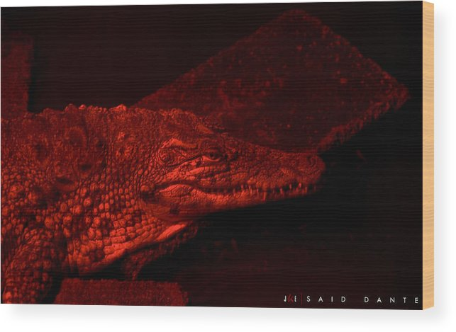 Alligator Wood Print featuring the photograph Said Dante by Jonathan Ellis Keys