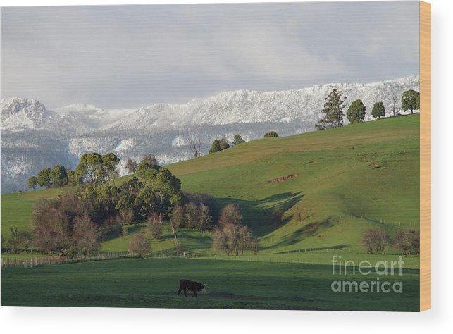 Great Western Tiers Wood Print featuring the photograph Snow On The Great Western Tiers, Tasmania by Leeo Photography